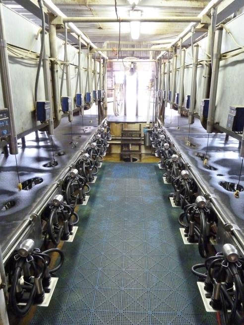 Brandl Farm 009