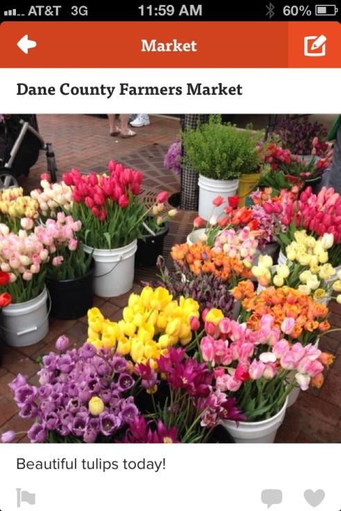 dane county (2)